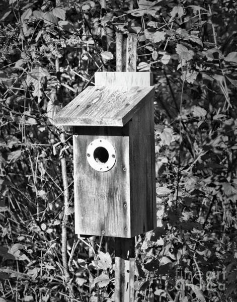 Photograph - Bird House In Black And White by Smilin Eyes  Treasures
