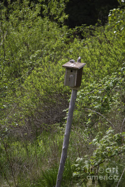 Photograph - Bird House In Centennial Park by Donna L Munro