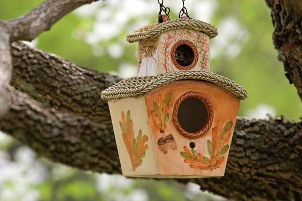 Photograph - Bird House by Jill Lang