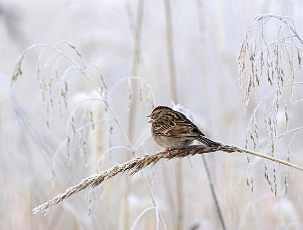 Photograph - Bird In First Frost by Paul Ross