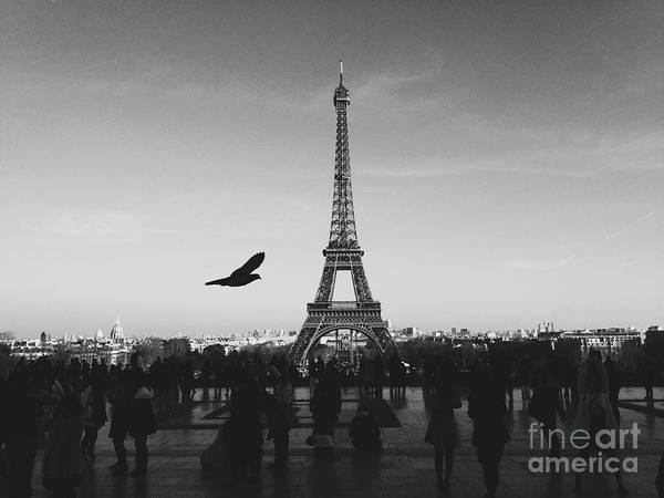 Wall Art - Photograph - Bird In Paris by MGL Meiklejohn Graphics Licensing
