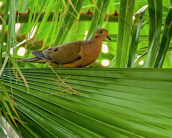 Photograph - Bird In The Palm H1849 by Mark Myhaver