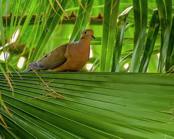 Photograph - Bird In The Palm H1852 by Mark Myhaver