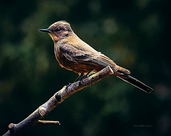 Digital Art - Bird In The Yard by Charles Muhle