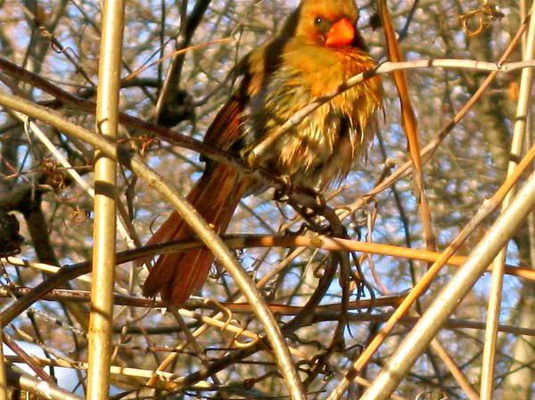 Photograph - Bird In Winter by Felix Zapata