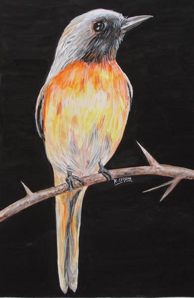 Bird Minivet Art Print by Rajesh Chopra