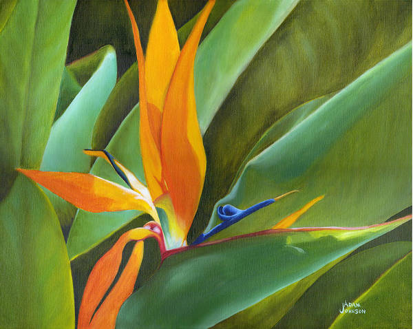 Painting - Bird Of Paradise by Adam Johnson