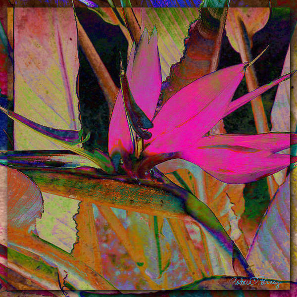 Digital Art - Bird Of Paradise by Barbara Berney