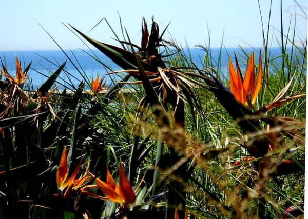Wall Art - Photograph - Bird Of Paradise By The Sea by Eve Paludan
