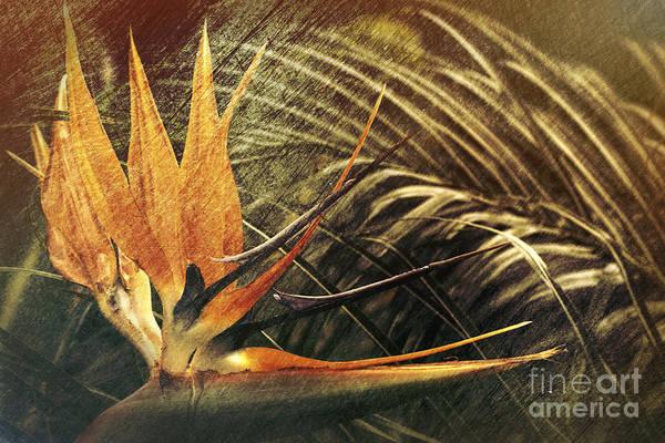 Photograph - Bird Of Paradise by Elaine Teague