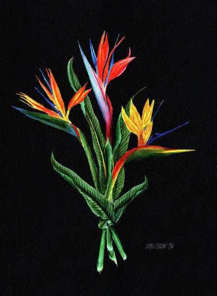 Wall Art - Painting - Bird Of Paradise In Black by Peter Piatt