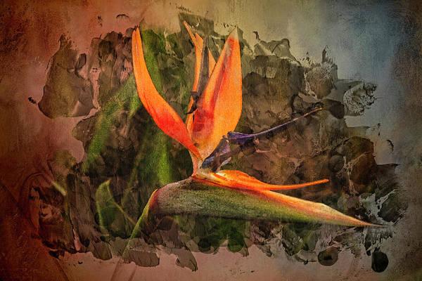 Digital Art - Bird Of Paradise by Richard Ricci