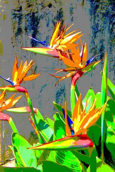Bird Of Paradise Art Print by Scott K Wimer