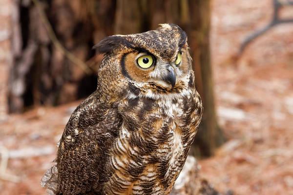 Photograph - Bird Of Prey by Jill Lang