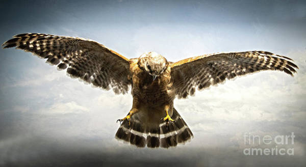 Photograph - Bird Of Prey by Judy Hall-Folde