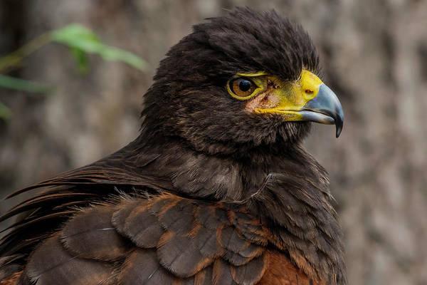 Photograph - Bird Of Prey by Wolfgang Stocker