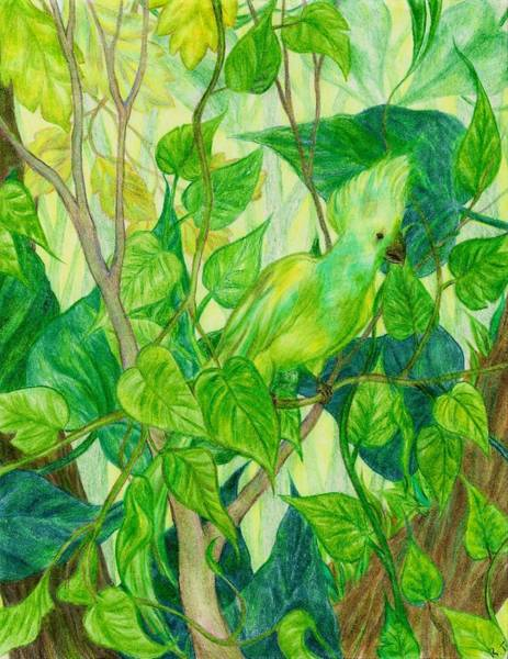 Green Parrot Drawing - Bird Of The Jungle by Rebecca Tripp