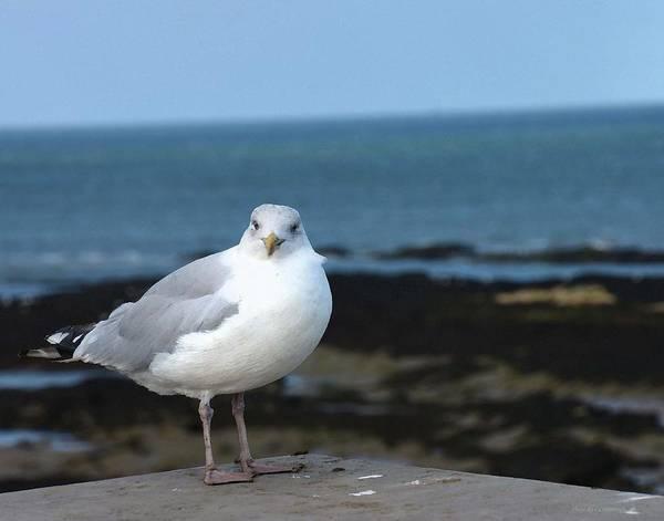 Photograph - Bird On A Beach by Coleman Mattingly