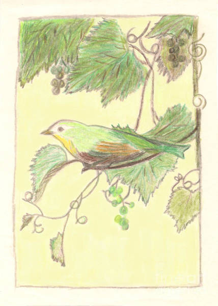 Drawing - Bird On A Branch by Donna L Munro