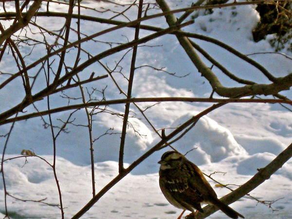 Photograph - Bird On A Branch by Felix Zapata