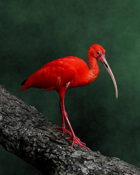 Photograph - Bird On A Catwalk by Debi Dalio