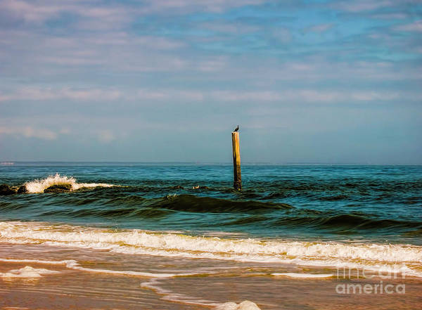 Wall Art - Photograph - Bird On A Pole by Elijah Knight