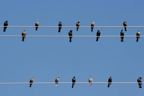 Christine Falls Photograph - Bird On A Wire by Christine Till