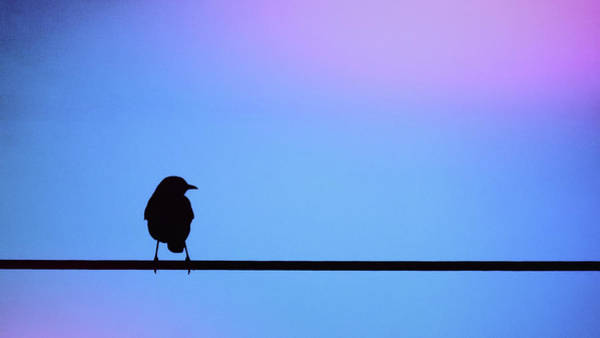 Bird On A Wire Silhouette Art Print