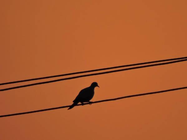 Pigpens Photograph - Bird Seat On Wire by Kishankumar Patel
