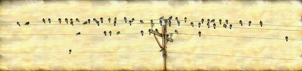 Photograph - Bird Song by James BO Insogna