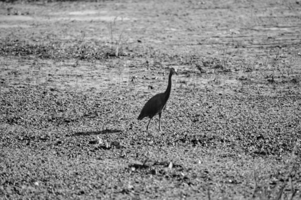 Photograph - Bird Standing by Joseph Caban