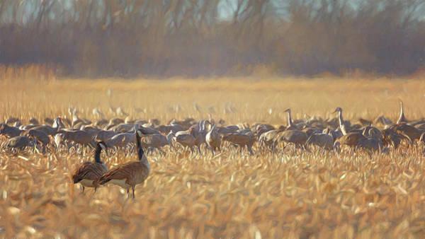 Photograph - Bird Watching Birds by Susan Rissi Tregoning