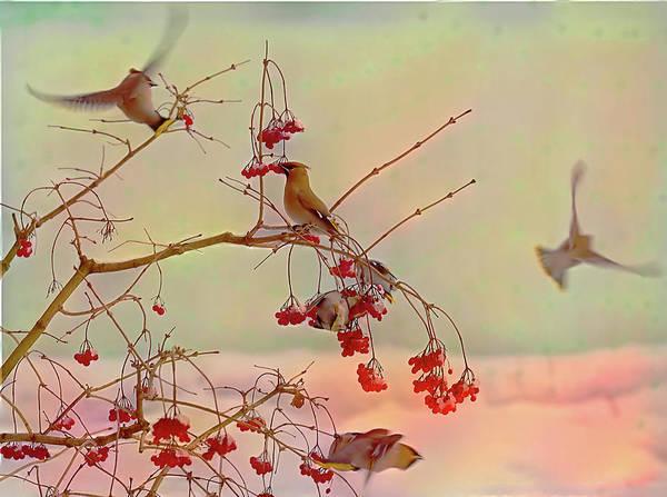 Waxwing Digital Art - Bird Waxwing by Evgeny Parushin
