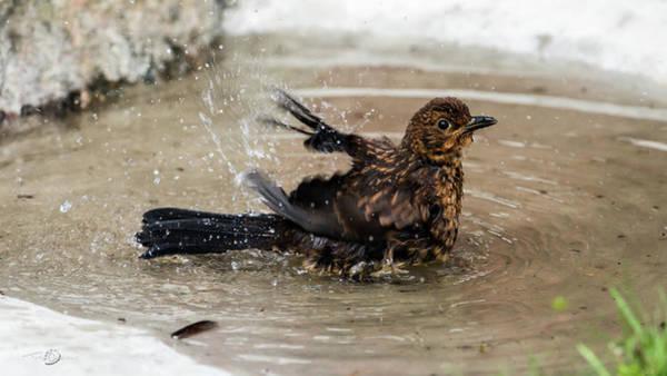 Photograph - Birdbath by Torbjorn Swenelius