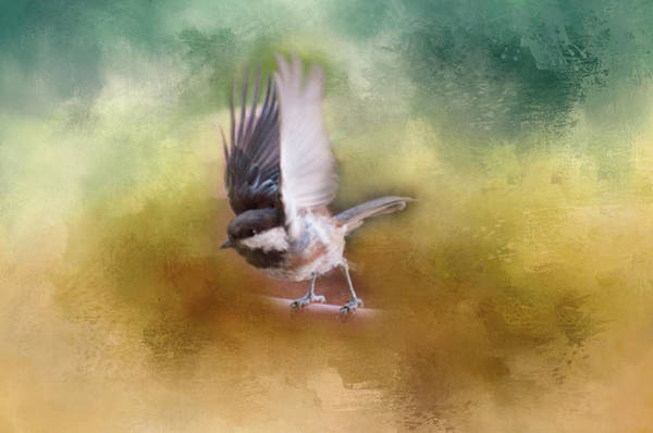 Photograph - Ready For Take-off by Marilyn Wilson