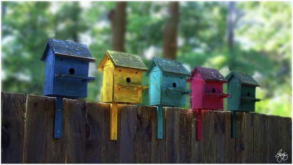 Photograph - Birdhouse Condos by Wayne King