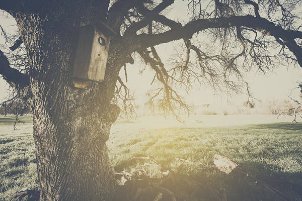Empty Nest Wall Art - Photograph - Birdhouse On A Tree With Vintage Style Filter by Brandon Bourdages