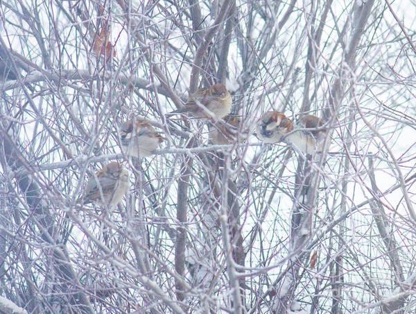 Photograph - Birdios by Donna L Munro