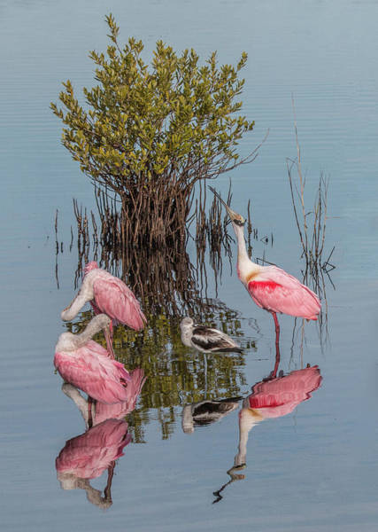Birds And Mangrove Bush Art Print
