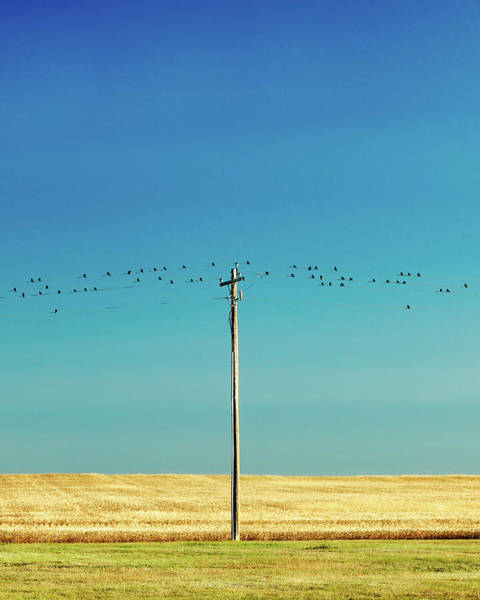 Wall Art - Photograph - Birds And Pole by Todd Klassy