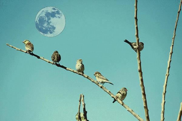 Photograph - Birds by Artistic Panda