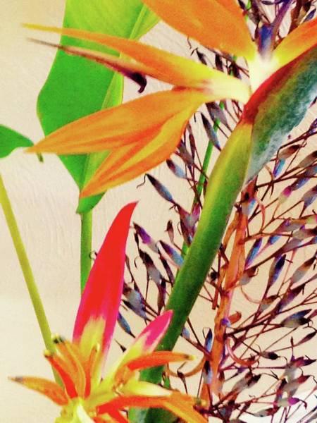 Birds Bromeliads Halyconia Art Print