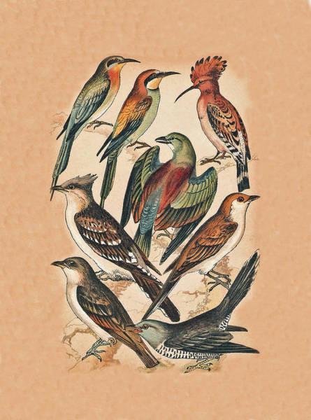 Mixed Media - Birds by Eric Kempson