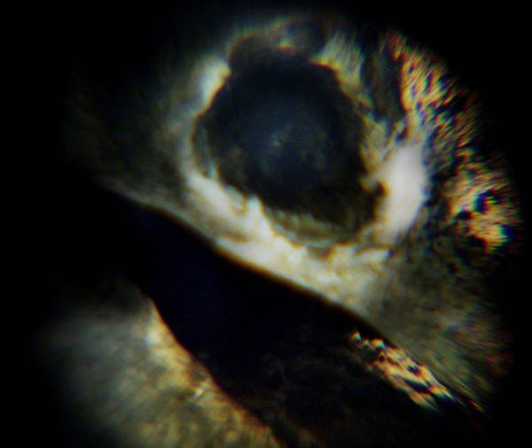 Photograph - Bird's Eye by Maria Reverberi