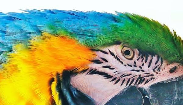 Photograph - Bird's Eye View by Al Fritz