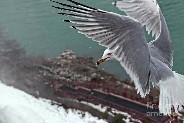 Niagara Falls State Park Photograph - Bird's Eye View by Charline Xia