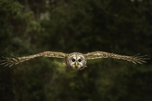 Christy Photograph - Birds Eye View by Christy Cox