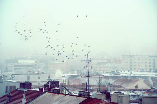 Photograph - Birds Falling Down The Rooftops by Jenny Rainbow