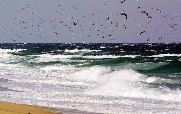 Whitecaps Photograph - Birds Feeding Frenzy by Matt Suess