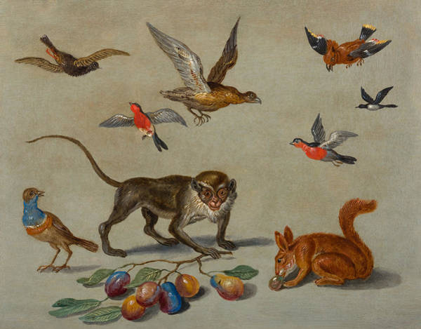 The Elder Painting - Birds Flying Around A Monkey by Jan van Kessel The Elder